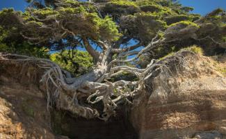 50 примеров деревьев с непреодолимым желанием жить (50фото)