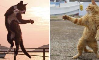 Уличные коты осваивают мастерство кунг-фу (20фото)