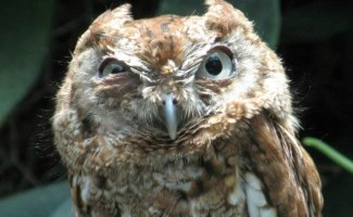 Самые сердитые животные в мире… на которых невозможно смотреть без улыбки (34фото)