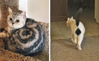 Природа рисует: самые удивительные кошачьи окрасы (45фото)