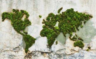 Экологически чистый стрит-арт: граффити, нарисованные мхом (34фото)