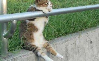 Смешные кошки, которые разучились сидеть по-кошачьи (17фото)