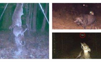 Тайная жизнь: что делают животные, когда их никто не видит (46фото)