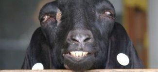 Неудачные фото животных (32фото)