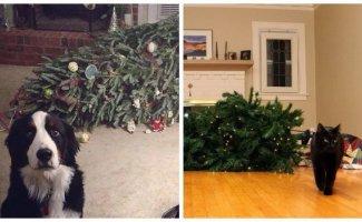 25 кошек и собак, которые разрушили Рождество (26фото)