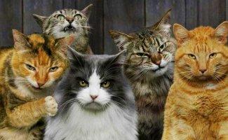 Бригады суровых котов (20фото)