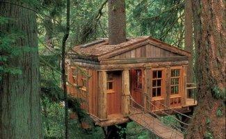 Мечта с детства - дома на деревьях (9фото)
