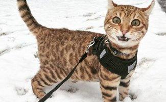 Забавные фотографии животных, которые в первый раз увидели снег (12фото)