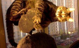 Пластилиновые коты (30фото)