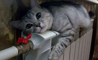 Кошачьей мерзлявости пост (26фото)
