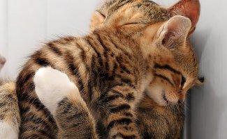 Умилительные фото животных, ставших мамами (20фото)