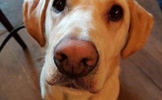Забавные и милые животные заряжают позитивом (30фото)