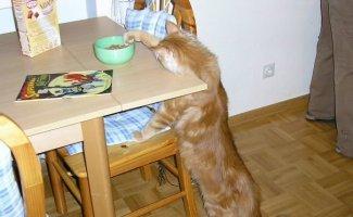 Коты-воришки (37фото)
