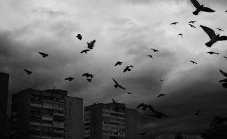 Самые колоритные уличные птицы (30фото)