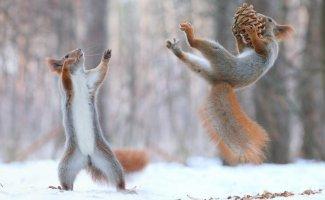 Животные зимой (29фото)