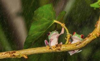Животные имеют свои способы, как спрятаться от дождя (16фото)
