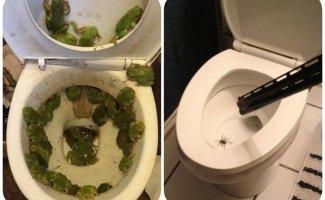13 неожиданных находок в туалете, от которых реально не по себе (14фото)