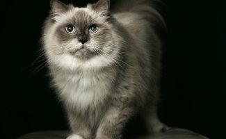 Кошачьи (68фото)