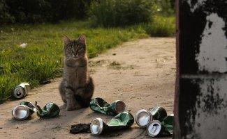 Очень колоритные уличные коты (31фото)