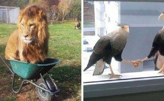 Фотографиии животных, поведение которых вызывает смех и много вопросов (26фото)