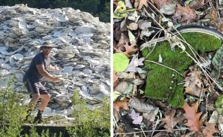 50 любопытных находок, сделанных в лесу (51фото)
