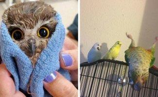 20 случаев, когда птицы были смешнее и харизматичнее всех остальных существ вместе взятых (21фото)