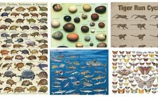 Животная инфографика (21фото)
