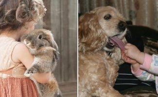 20 реакций домашних животных на детей в доме (21фото)