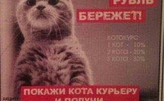 Приколы из сферы торговли и услуг + 1 кот из домашней обстановки! (11фото)