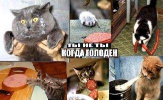 Подборка картинок с котами и про котов (40фото)