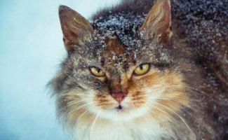 Так милы сердцу дворовые коты (40фото)