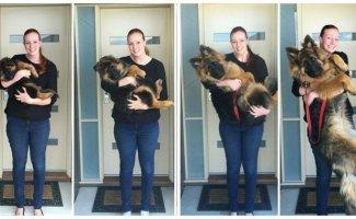 Тогда и сейчас: 50 фотографий собак, которые повзрослели вместе со своими хозяевами (50фото)