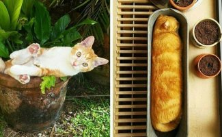 20 снимков котиков в горшках, доказывающих, что коты — цветы жизни, которые не нужно поливать (21фото)