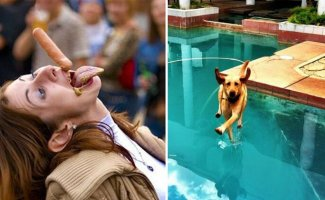 20 забавных происшествий, которые запечатлели в идеальный момент (21фото)