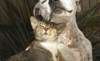 Как кошка с собакой (39фото)