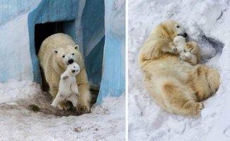 Малыши и мамы из мира животных (29фото)