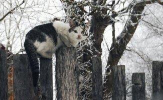 Был бы забор, а кот найдётся! (35фото)