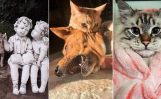 30 фотографий, доказывающих, что коты вездесущи (31фото)