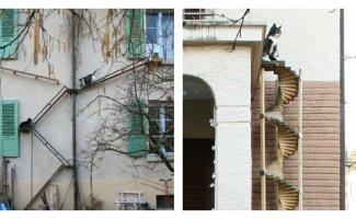 В Швейцарии делают специальные лестницы для кошек (23фото)