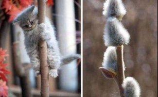 Очаровательные животные, которые вызовут улыбку и подарят позитив на весь день (25фото)