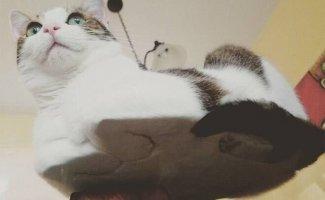 Коты-плюшки (18фото)