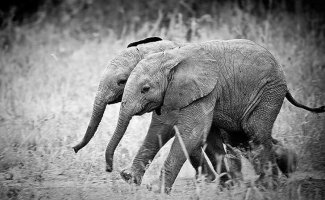 25 животных-близнецов, которые не оставят вас равнодушными (26фото)