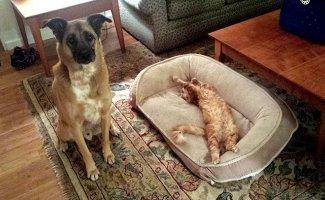 Коты священные животные. Вот доказательства (10фото)