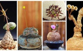 25 голых растений, прикрывающихся лишь цветами (30фото)