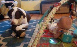 Собаки и дети — лучшие друзья навеки! (25фото)