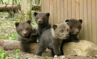 Медвежата (10 фото)