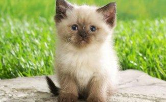 Котята (9 фото)
