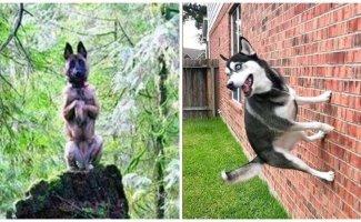 18 собак, которые похожи на кого угодно, только не на собак (19фото)