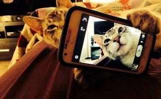 Коты делали селфи задолго до того, как это стало мейнстримом (22фото)