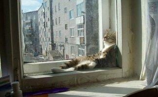 Фото котиков, которые любят тепло (20фото)
